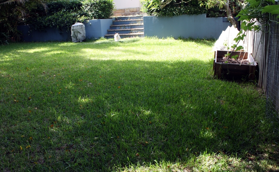 Grassed backyard with direct rear lane access for boat / vehicle / caravan storage in Freshwater
