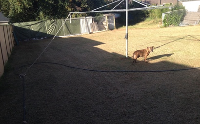 Campbelltown - Back yard huge space
